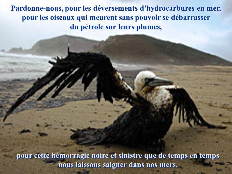 Pardonne-nous, pour les déversements d hydrocarbures en mer, pour les oiseaux qui meurent sans pouvoir se débarrasser du pétrole sur leurs plumes,