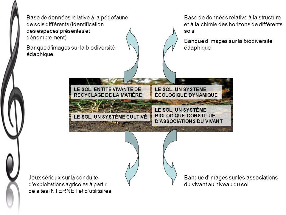 Banque d'images sur la biodiversité édaphique