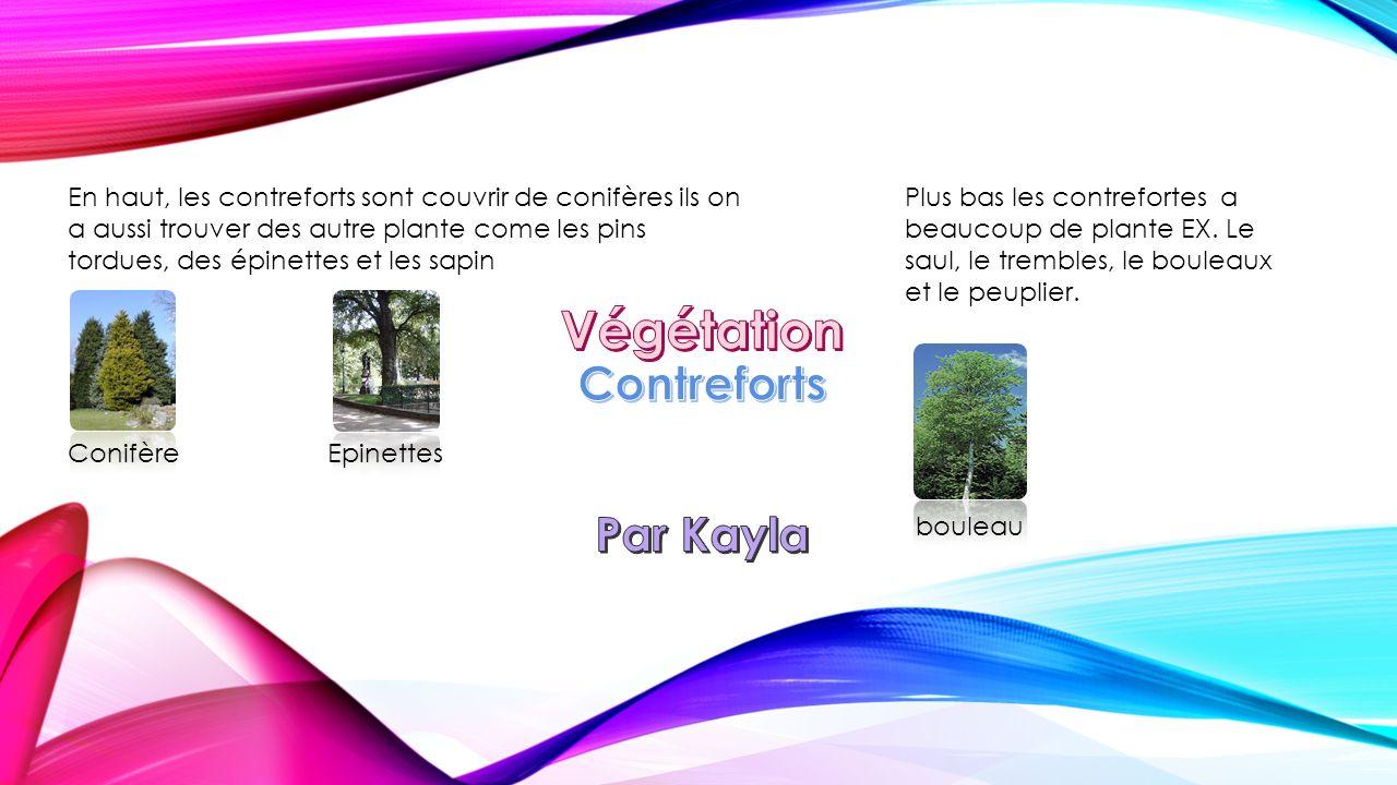 Végétation Contreforts