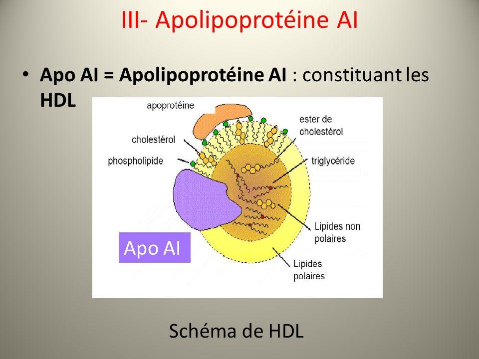 III- Apolipoprotéine AI