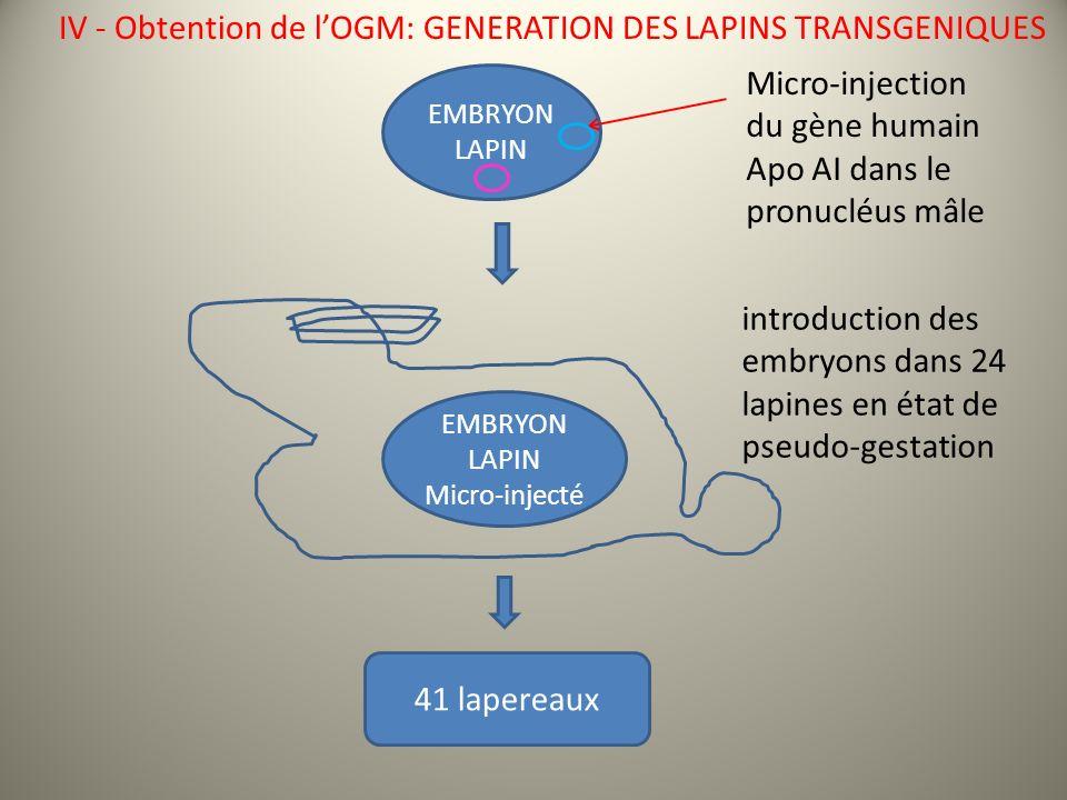 IV - Obtention de l'OGM: GENERATION DES LAPINS TRANSGENIQUES