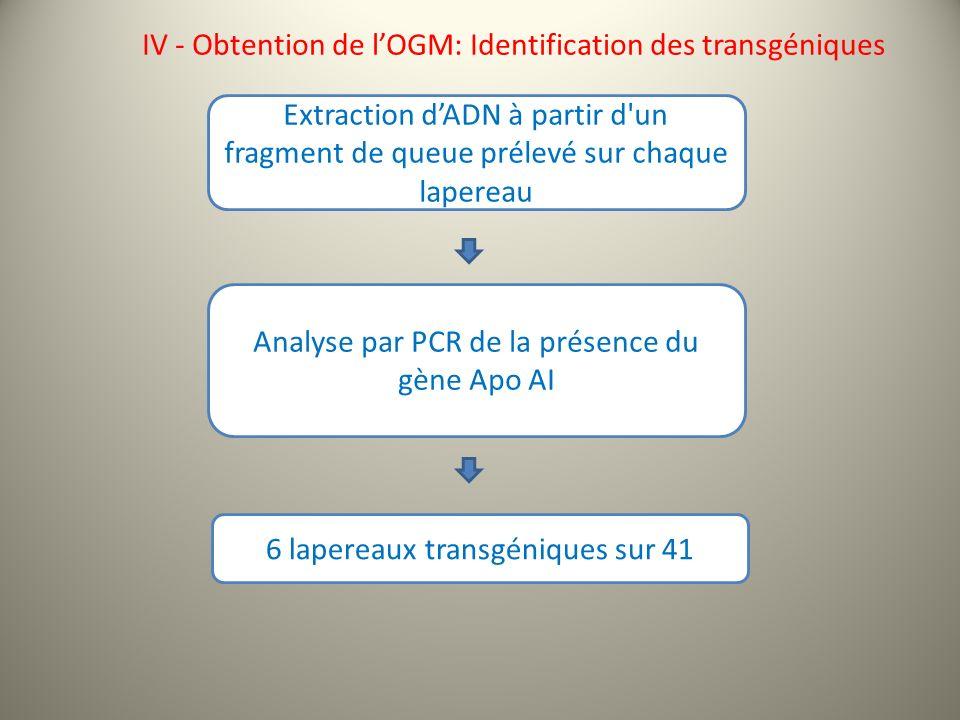 IV - Obtention de l'OGM: Identification des transgéniques