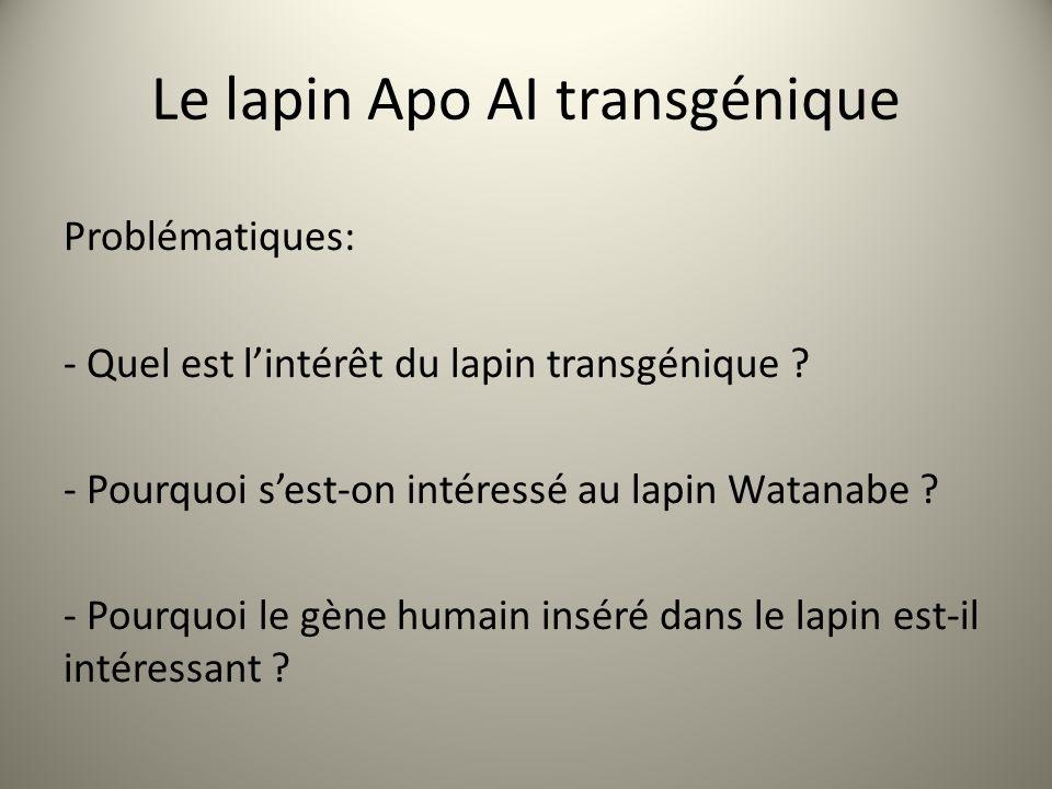 Le lapin Apo AI transgénique