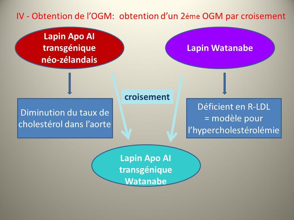 IV - Obtention de l'OGM: obtention d'un 2éme OGM par croisement