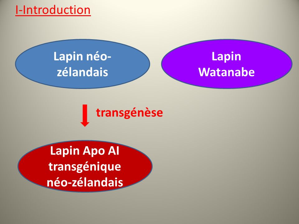 Lapin Apo AI transgénique néo-zélandais