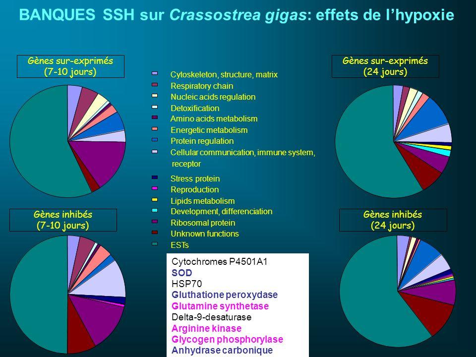 BANQUES SSH sur Crassostrea gigas: effets de l'hypoxie