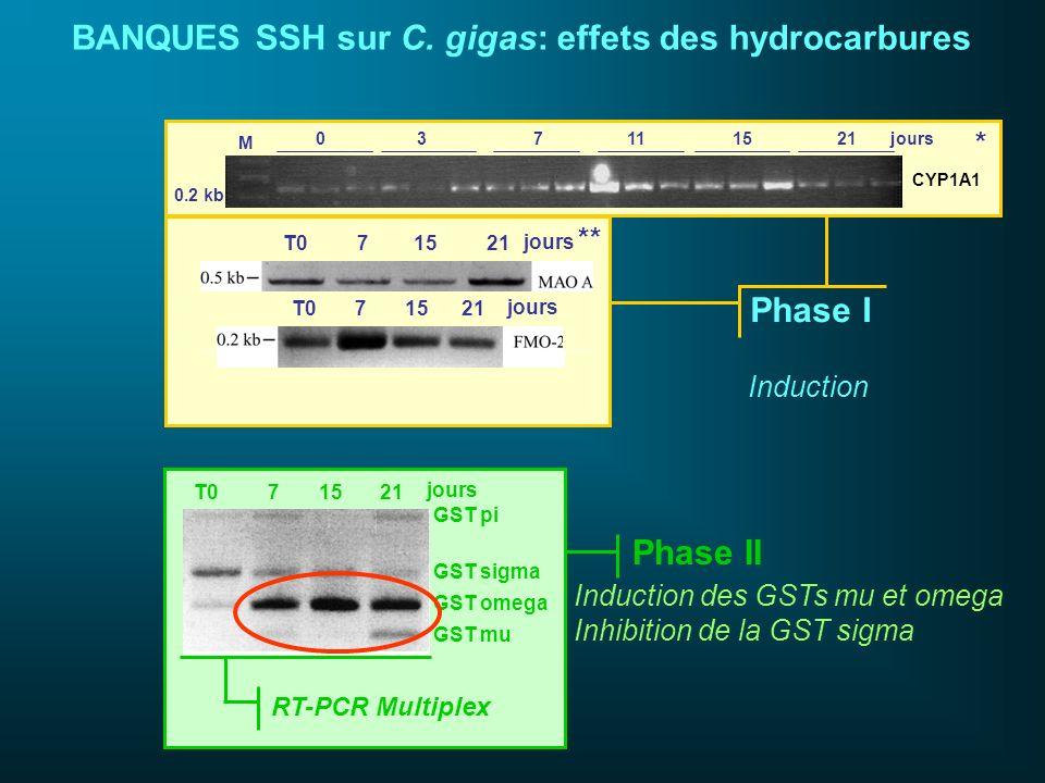 BANQUES SSH sur C. gigas: effets des hydrocarbures