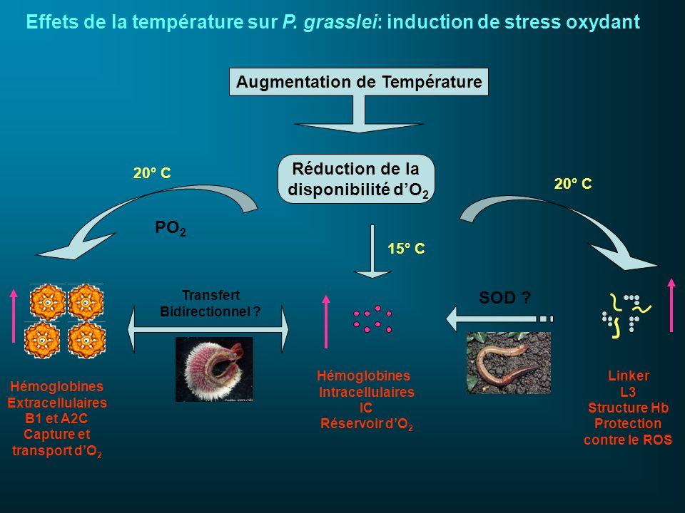 Effets de la température sur P. grasslei: induction de stress oxydant