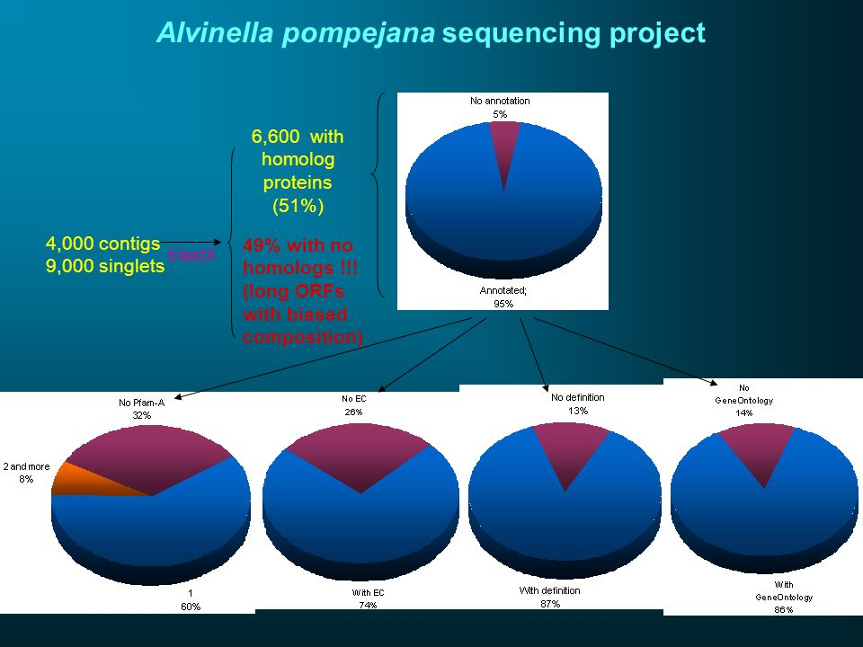 Alvinella pompejana sequencing project