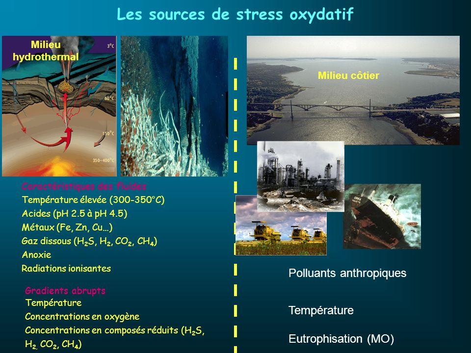 Les sources de stress oxydatif