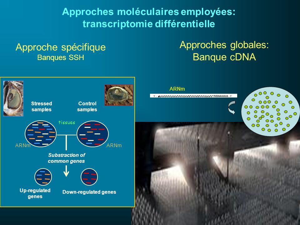 Approches moléculaires employées: transcriptomie différentielle