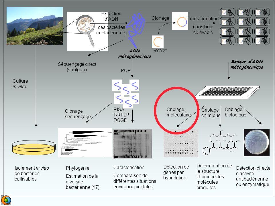Banque d'ADN métagénomique
