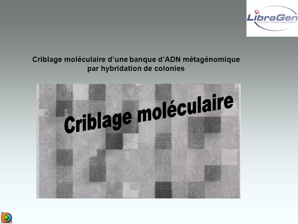 Criblage moléculaire d'une banque d'ADN métagénomique