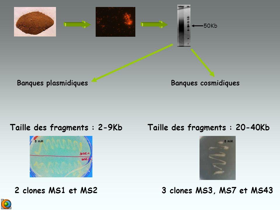 Taille des fragments : 2-9Kb Taille des fragments : 20-40Kb