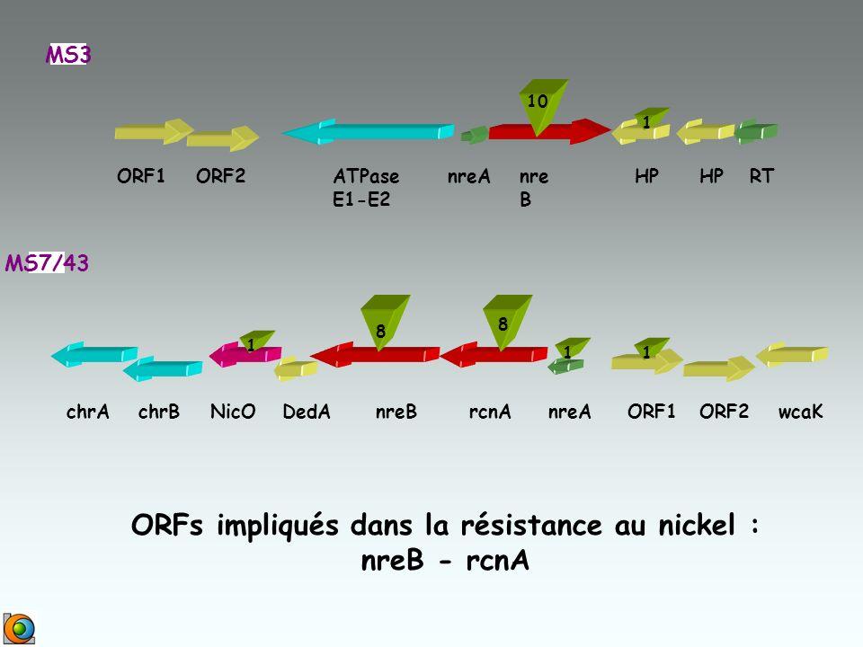 ORFs impliqués dans la résistance au nickel :
