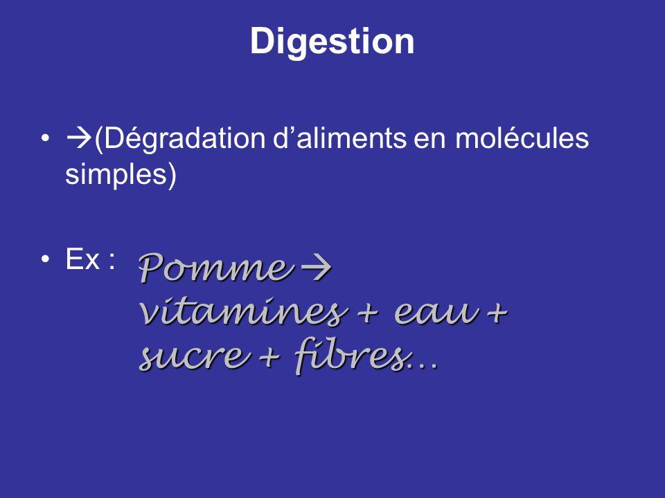 Pomme  vitamines + eau + sucre + fibres…