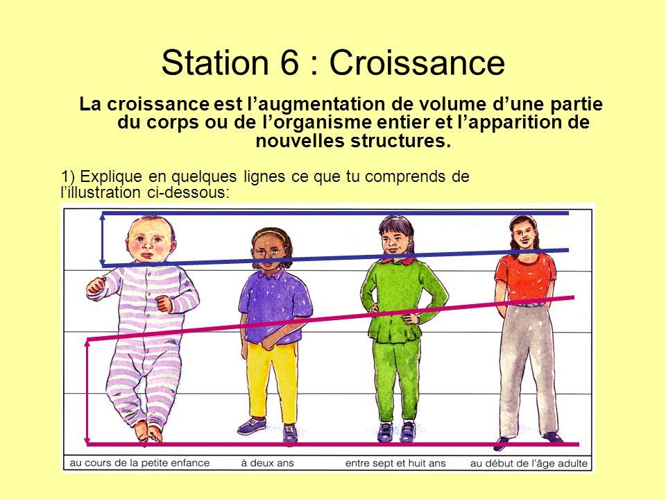 Station 6 : Croissance