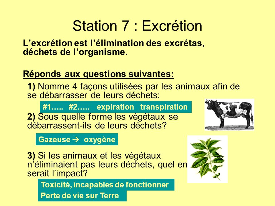 Station 7 : Excrétion L'excrétion est l'élimination des excrétas, déchets de l'organisme. Réponds aux questions suivantes: