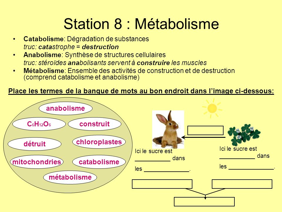 Station 8 : Métabolisme Catabolisme: Dégradation de substances. truc: catastrophe = destruction. Anabolisme: Synthèse de structures cellulaires.