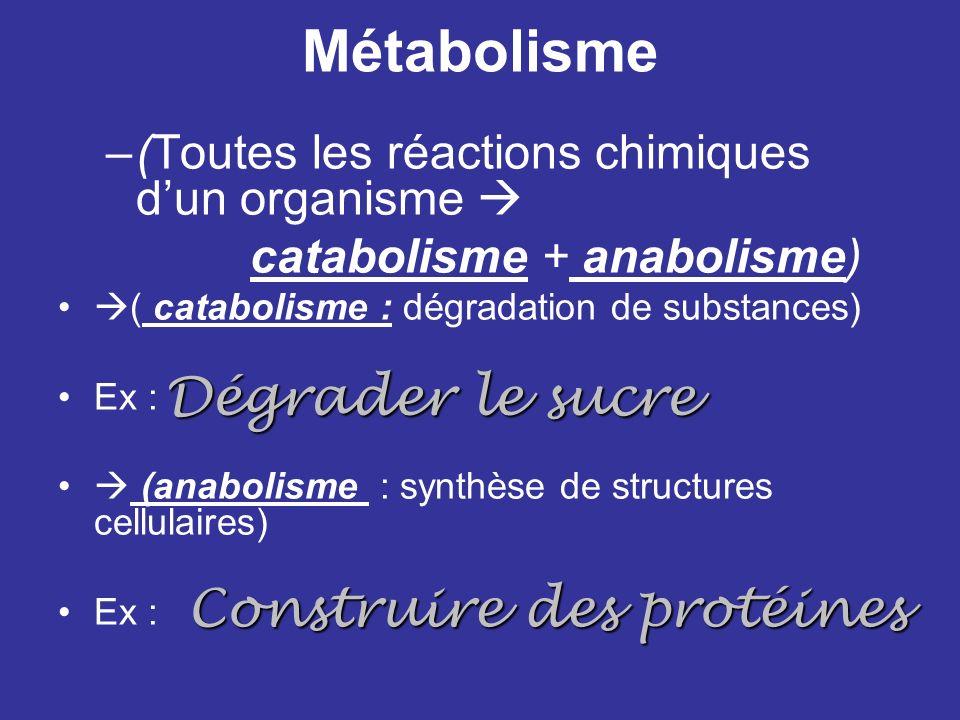 Métabolisme Dégrader le sucre Construire des protéines