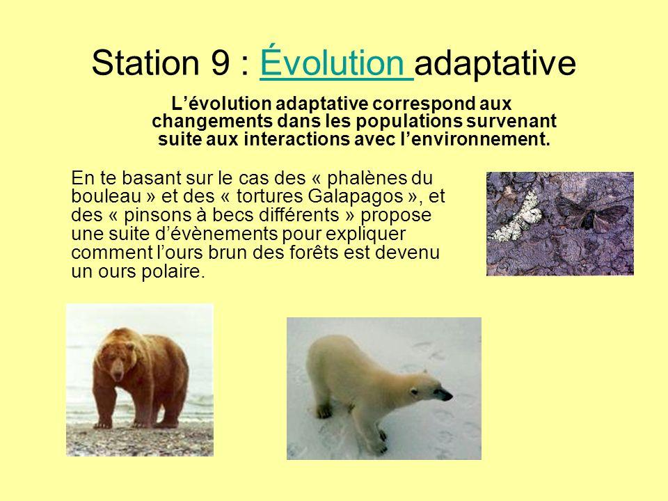 Station 9 : Évolution adaptative