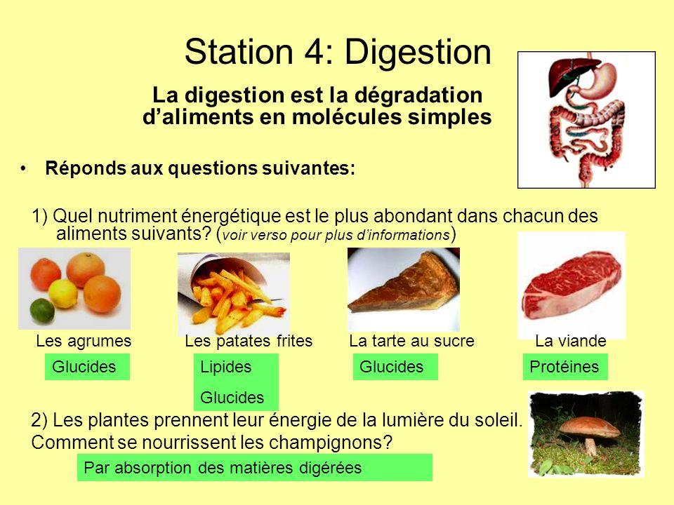 La digestion est la dégradation d'aliments en molécules simples
