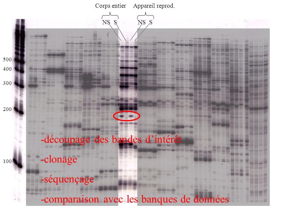 -découpage des bandes d'intérêt -clonage -séquençage