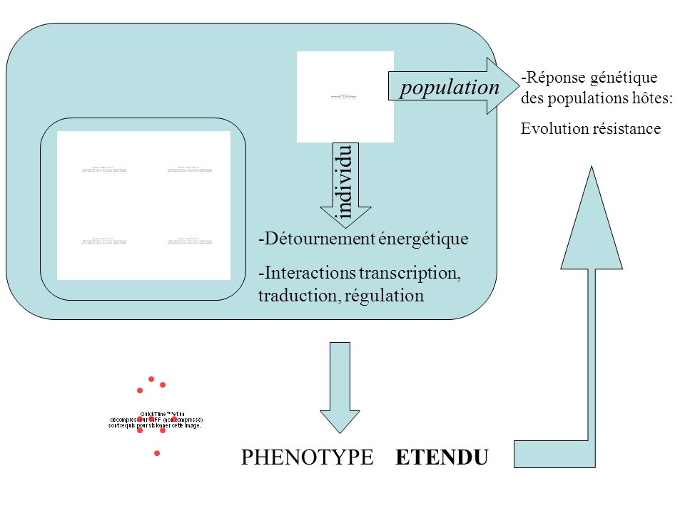 population individu PHENOTYPE ETENDU -Détournement énergétique