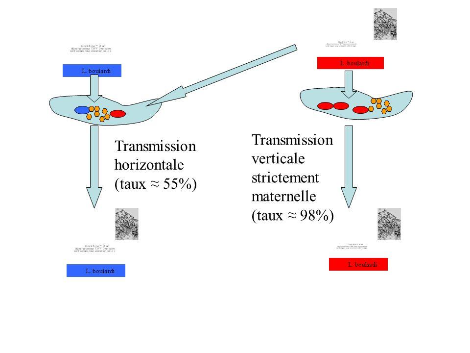 Transmission horizontale (taux ≈ 55%)