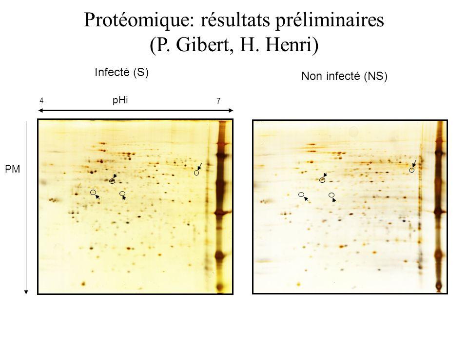 Protéomique: résultats préliminaires (P. Gibert, H. Henri)