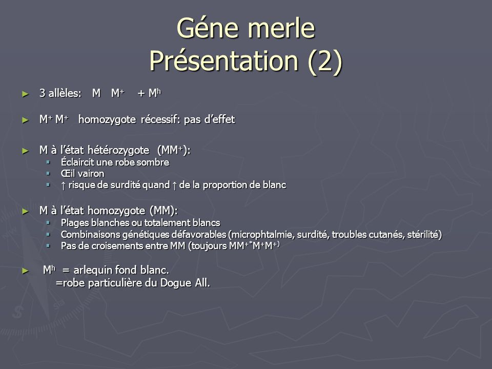 Géne merle Présentation (2)