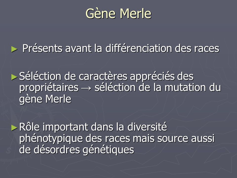 Gène Merle Présents avant la différenciation des races