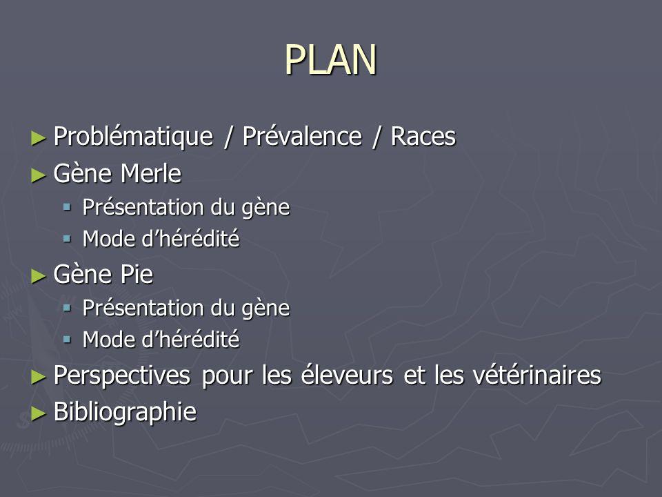 PLAN Problématique / Prévalence / Races Gène Merle Gène Pie
