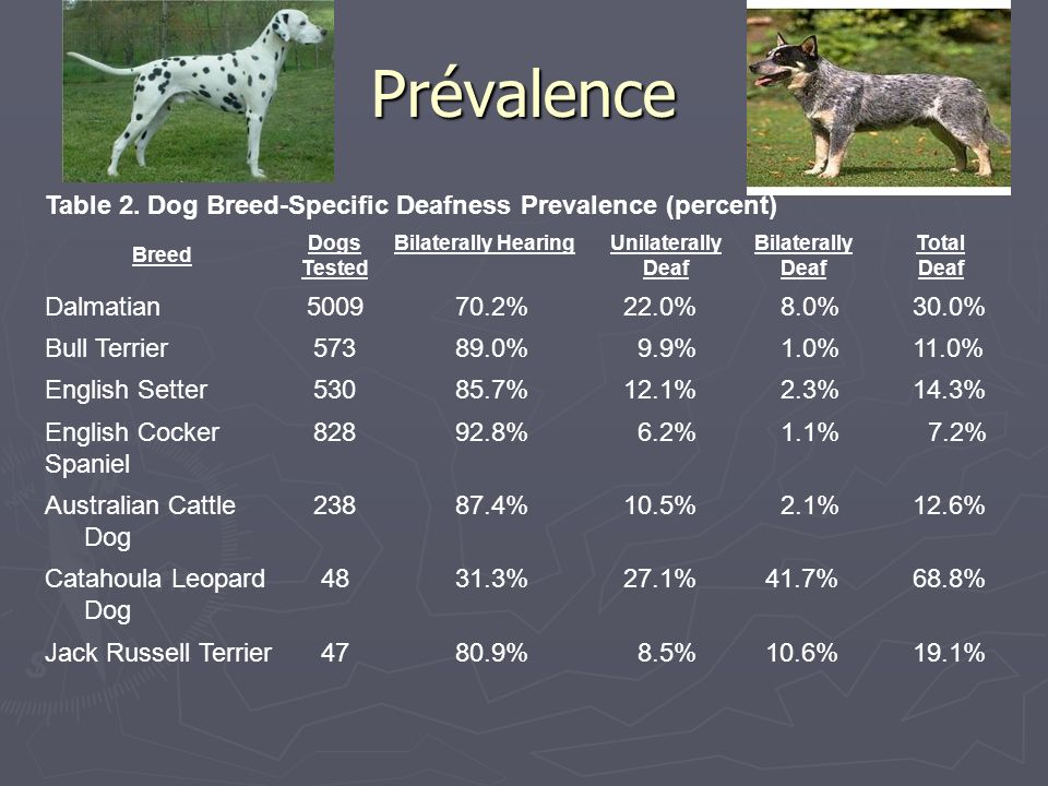 Prévalence Table 2. Dog Breed-Specific Deafness Prevalence (percent)