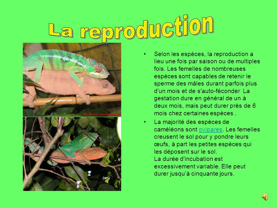 . La reproduction.