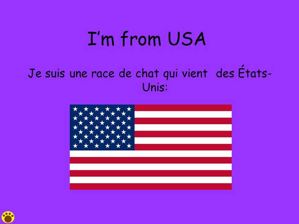 Je suis une race de chat qui vient des États-Unis: