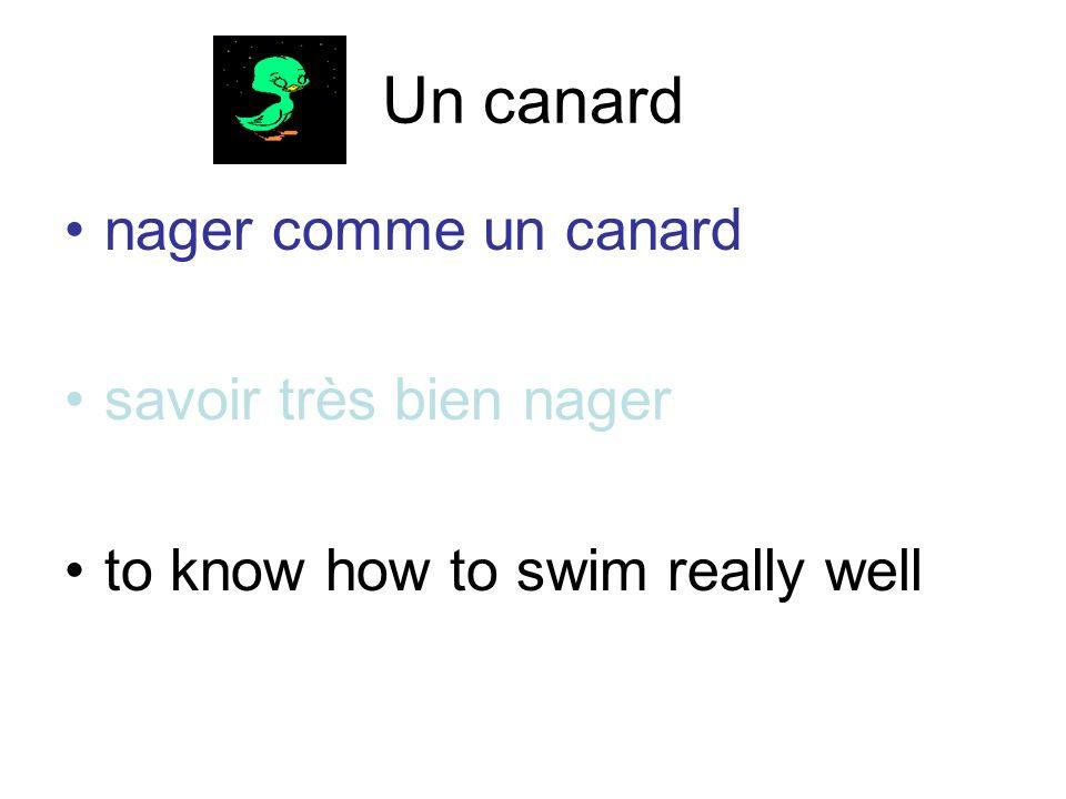 Un canard nager comme un canard savoir très bien nager