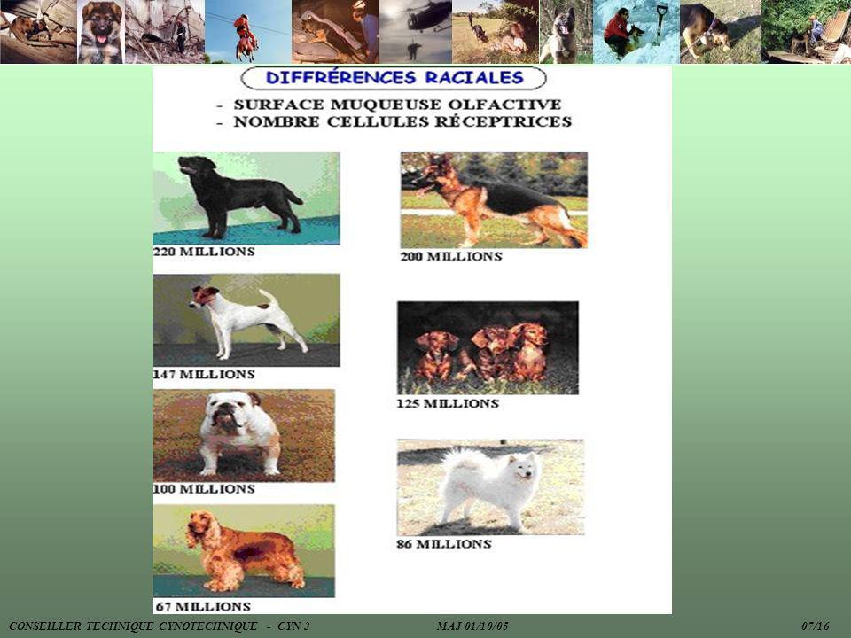 CONSEILLER TECHNIQUE CYNOTECHNIQUE - CYN 3 MAJ 01/10/05 07/16