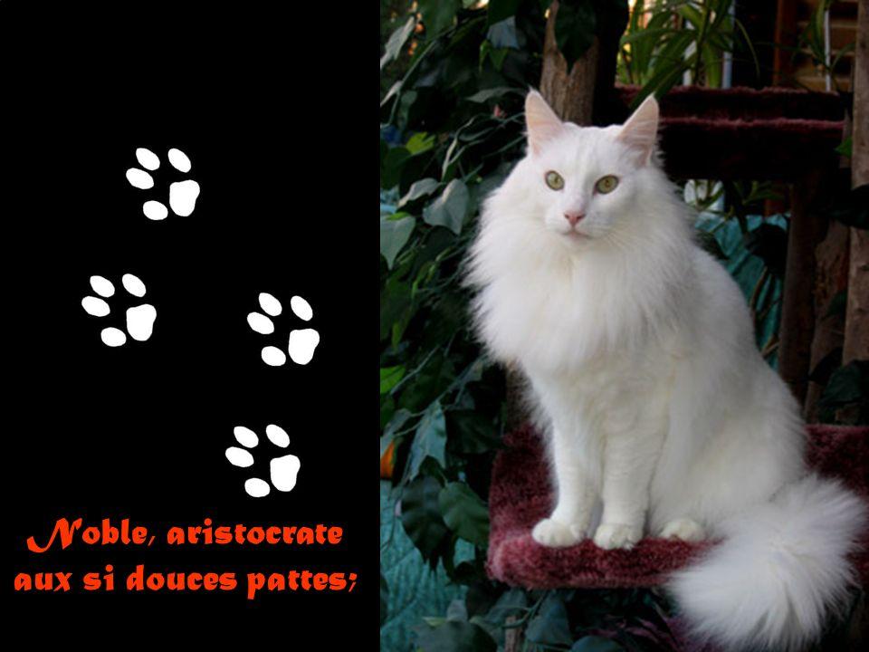 Noble, aristocrate aux si douces pattes;