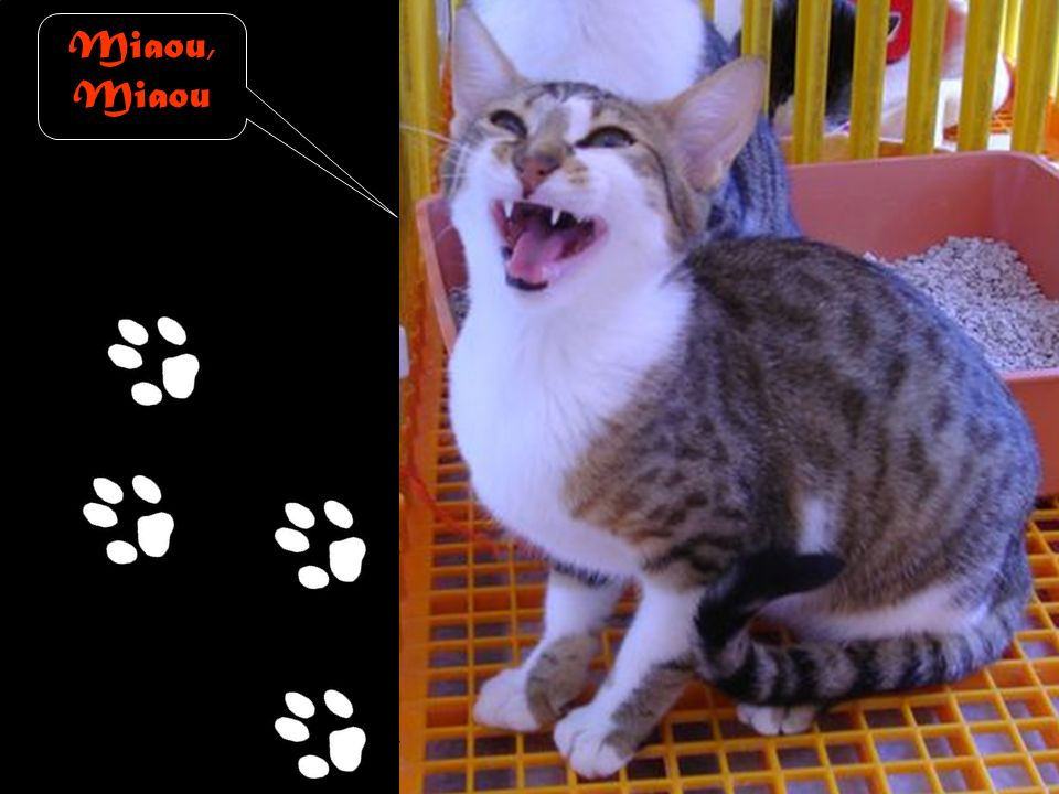 Miaou, Miaou