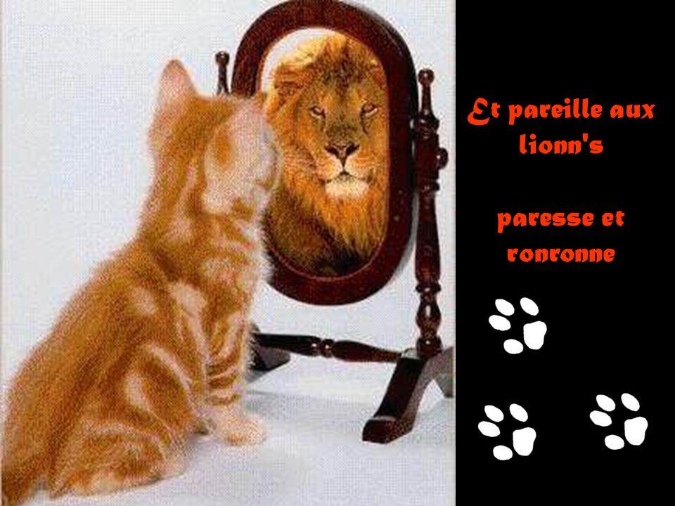 Et pareille aux lionn s paresse et ronronne