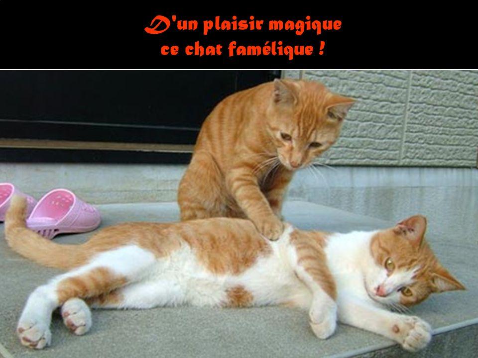 D un plaisir magique ce chat famélique !