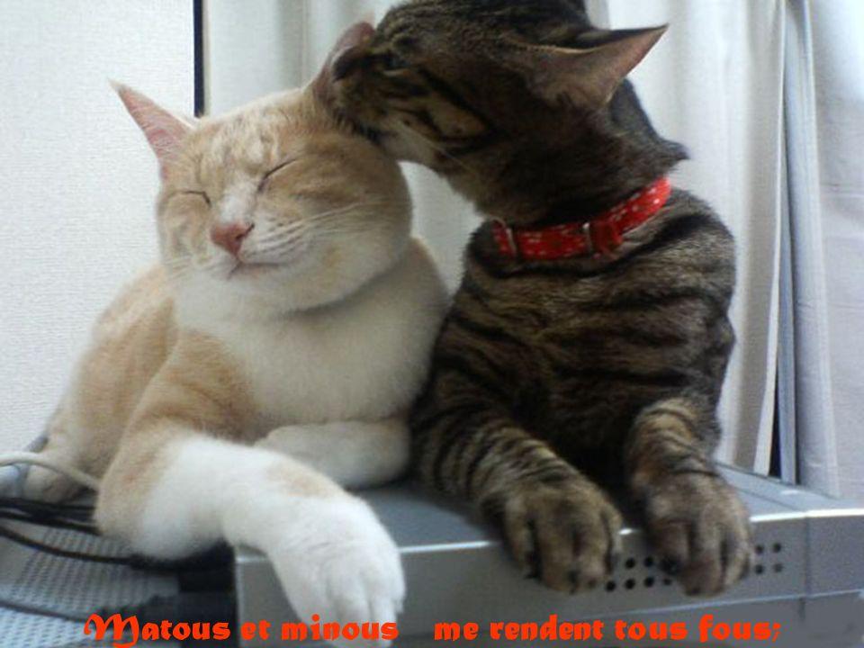 Matous et minous me rendent tous fous;