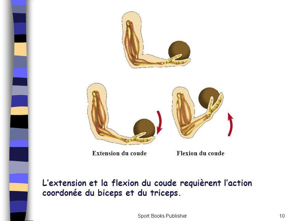 Extension du coude Flexion du coude. L'extension et la flexion du coude requièrent l'action coordonée du biceps et du triceps.