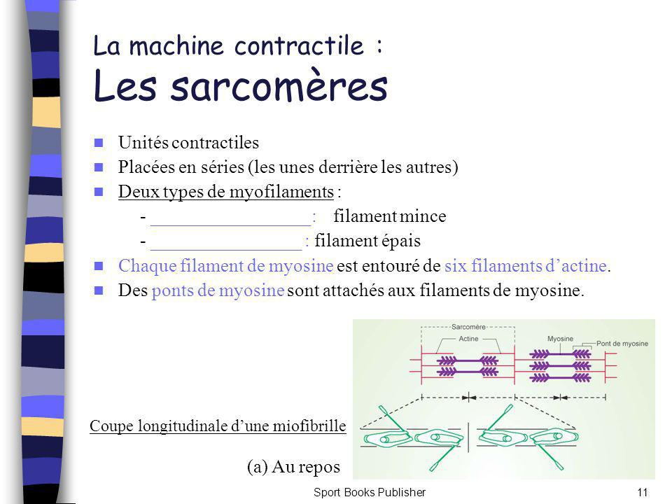 La machine contractile : Les sarcomères