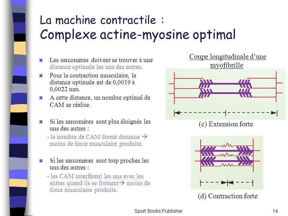 La machine contractile : Complexe actine-myosine optimal