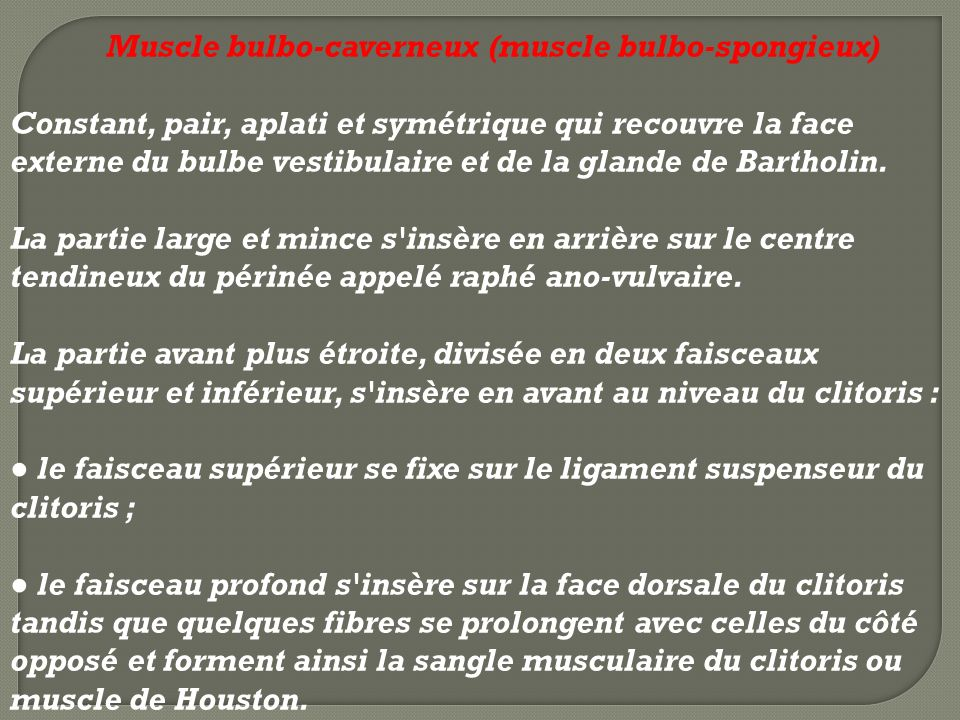 Muscle bulbo-caverneux (muscle bulbo-spongieux)