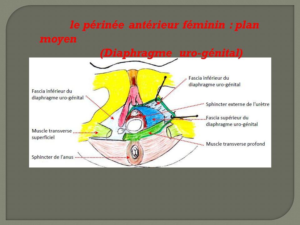 le périnée antérieur féminin : plan moyen