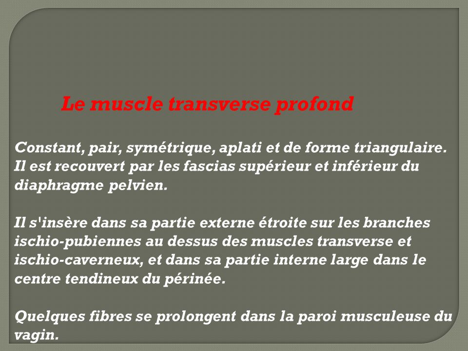 Le muscle transverse profond