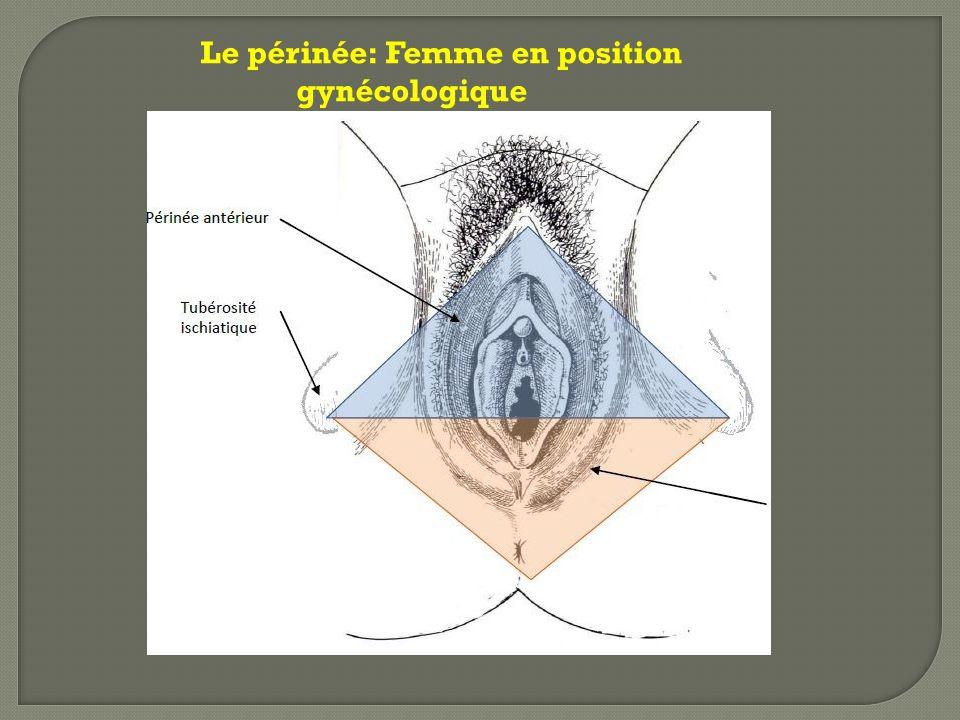 Le périnée: Femme en position gynécologique
